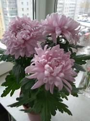 Цветы в городе_1