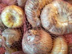 гладиолусы луковицы на хранении4.jpg