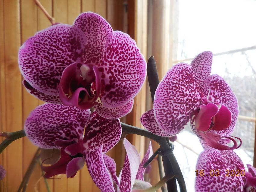 Моя новая орхидея