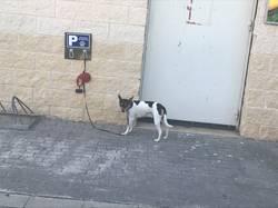 Бенисса - парковка для собак