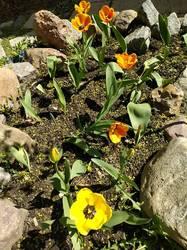 Цветы (2)
