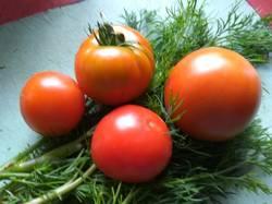 вот они первые помидоры 2020))).jpg