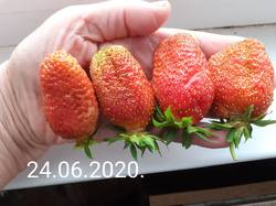 клубника ягода.jpg