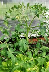 мармеладная лампочка второе растение