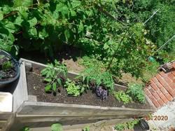 Томаты и зелень в бывшей клумбе