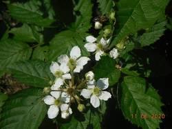 Пчёлка на Лох Тее