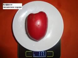 Буффало гигантское сердце 20.08 вес_.jpg