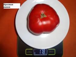 Красивая рыжая 24.08 вес(2)_.jpg