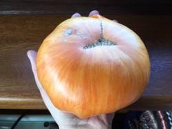 Оранж Джаз,.jpg
