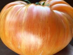 Оранж Джаз.jpg