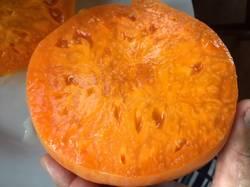 Оранж Джаз срез3.JPG