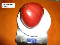 Сердцевидный из Уэски  20.08 вес_.jpg
