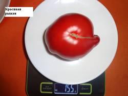 Красивая рыжая 24.08 вес_.jpg