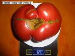 Винный болгарский великан (А) 21.08 вес_.jpg