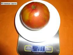 Истинные цвета (Д) 21.08 вес (2)_.jpg