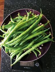Серенгети фасоль из сп Золушки