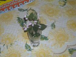 Первые цветы ежевики, 2015 год