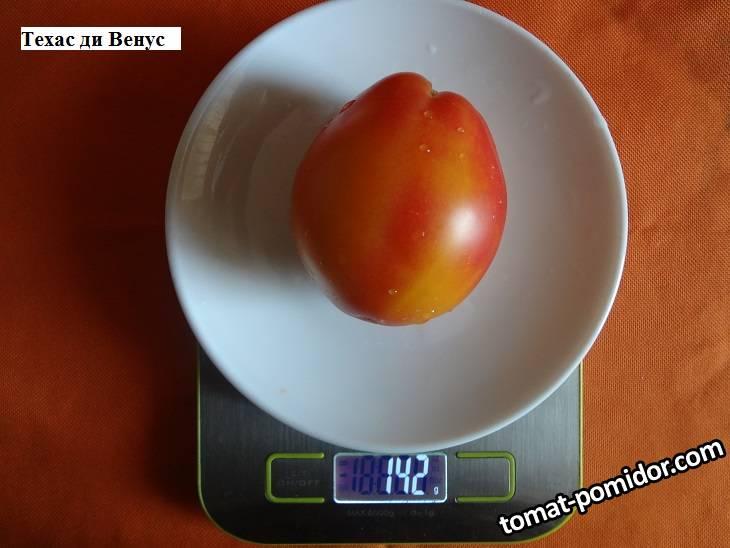 Техас ди Венус 24.09 вес_.jpg