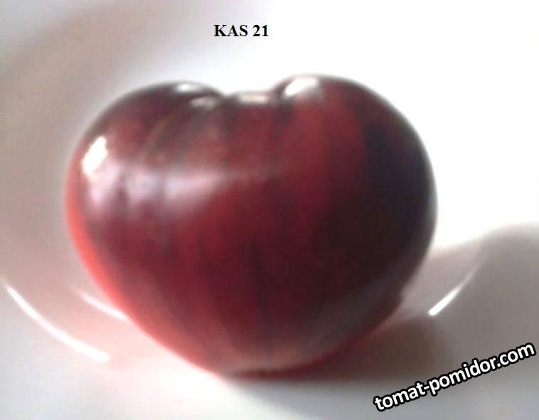 КАС 21 (2).jpg