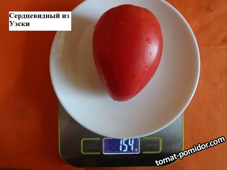 Сердцевидный из Уэски (Д) 20.09 вес.jpg_.jpg