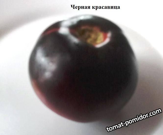 Черная карсавица.jpg