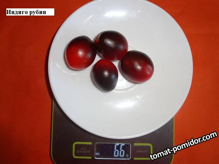 томаты 2020 г. ч.4