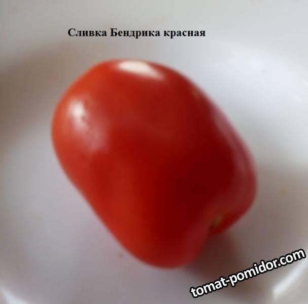 Сливка Бендрика красная 1.jpg
