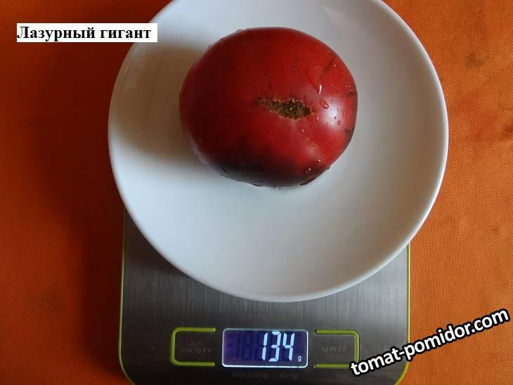Лазурный гигант 20.09 вес.jpg_.jpg