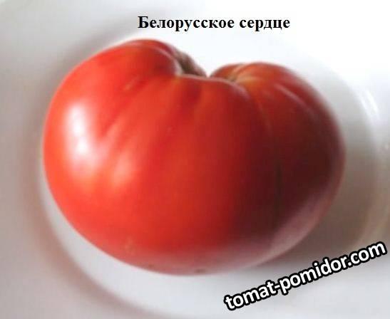 Белорусское сердце.jpg