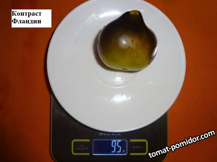 Контраст Фландии 19.09 вес.jpg_.jpg
