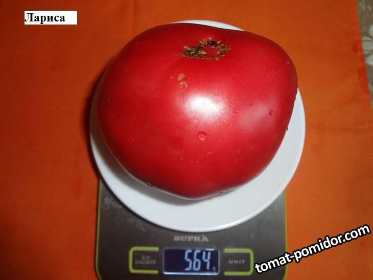 Лариса 19.09 вес.jpg_.jpg