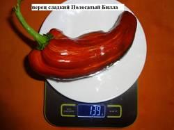 Полосатый Билла 16.09 вес.jpg_.jpg