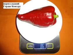 Сердце кенгуру 17.09 вес.jpg_.jpg