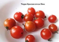 Черри Красная ягода Ивы.jpg
