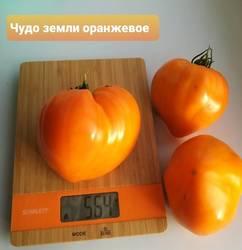 Чудо земли оранжевое