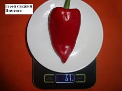 Пименто 17.09 вес.jpg_.jpg