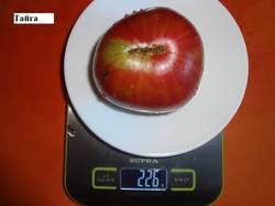 Тайга (Д) тупоносое 16.09 вес.jpg_.jpg
