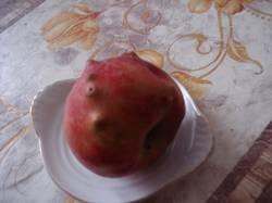 DSC00248.JPG Ковидное какое-то яблоко.