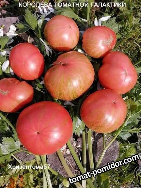 Королева томатной галактики.jpg