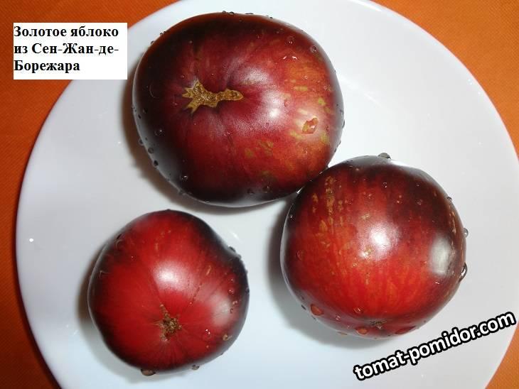 Золотое яблоко из Сен-Жан-де-Борежара 26.09_.jpg