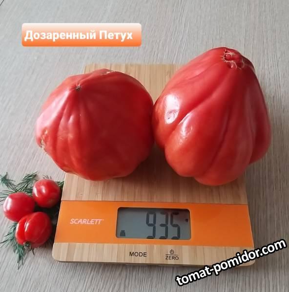 Петух дозаренный)))