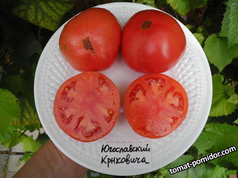 Югославский Крнковича (Crnkovic Yugoslavian)2.JPG