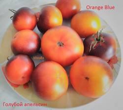 оранжево синий.jpg