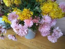 хризантемы крупные сиреневые и желтые.jpg
