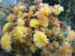 хризантема мультифлора желтая мелкая.jpg