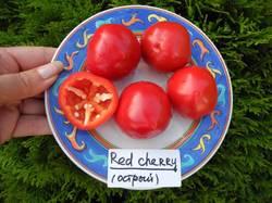 Large Red Cherry (слабоострый перец от Мечиславовны) 2.JPG