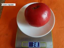 Седое сердце 19.09 вес.jpg_.jpg