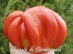 Гигант Карманьола ( Италия)