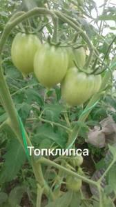 Polish_20200628_133633080.jpg