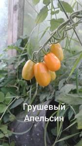 Polish_20200725_113657834.jpg